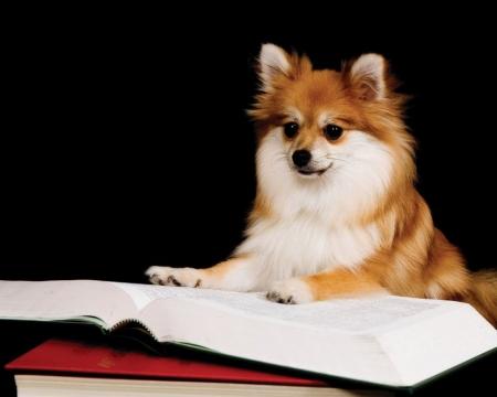 Сказочная собакиада