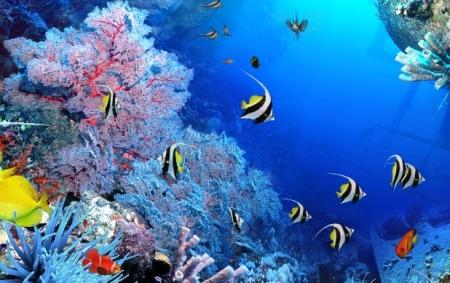 «В подводном царстве, в загадочном государстве»: игра-путешествие