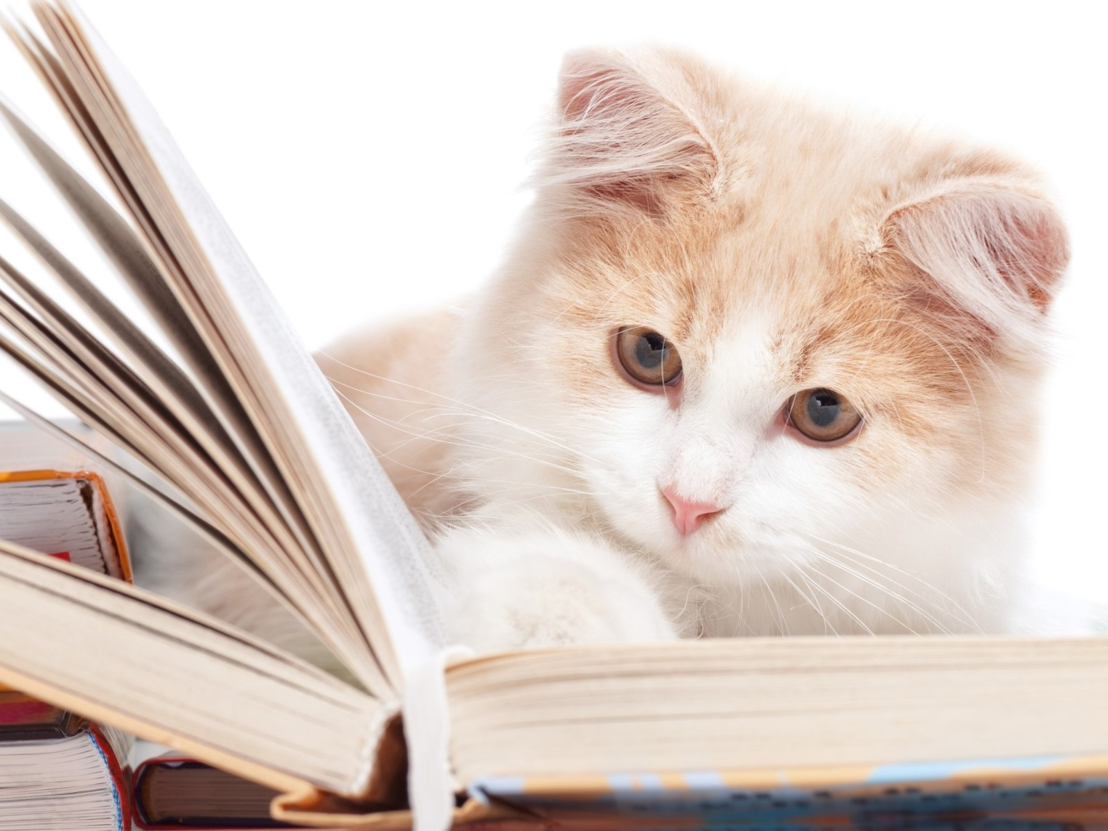 Коты-Воители в библиотеке