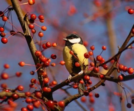 Подкорми птиц зимою — послужат тебе весною