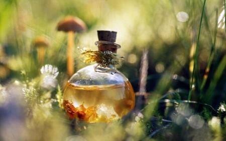 Квест «В поисках волшебного эликсира»