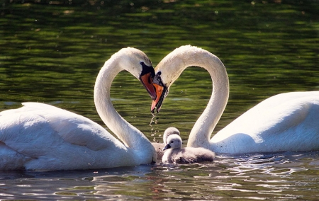 Афиша мероприятий к Всероссийскому дню семьи, любви и верности